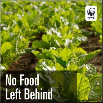 No Food Left Behind: Part 1: Underutilized Produce Ripe for Alternative Markets
